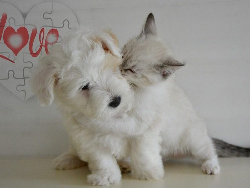 puppy-and-kitten-800x573