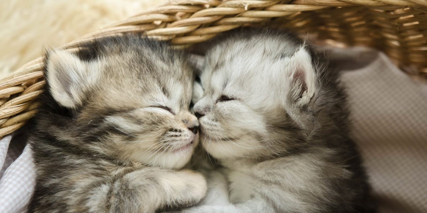 kitten-packages