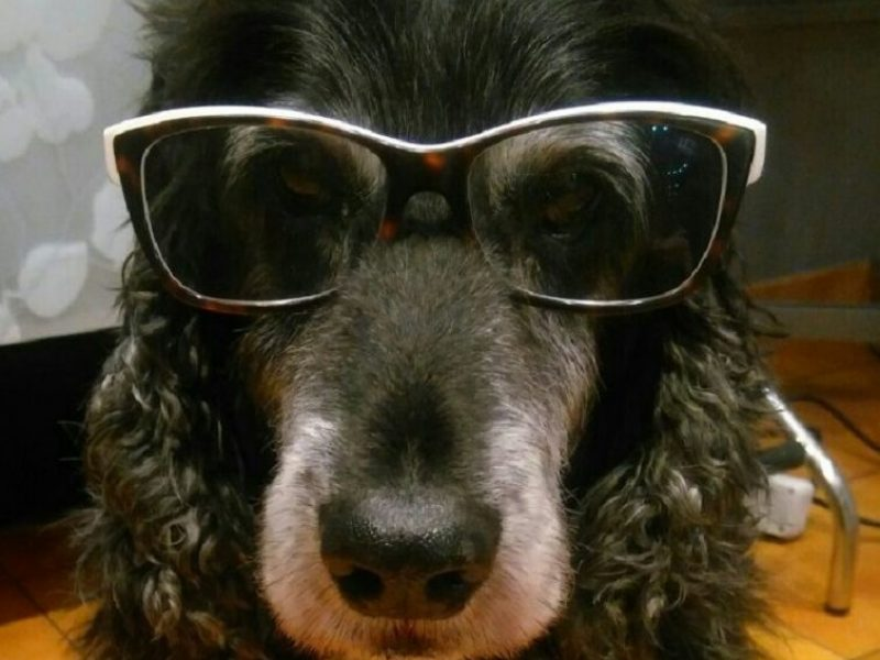 Alicias-dog-Brego-755-x-755-755x600