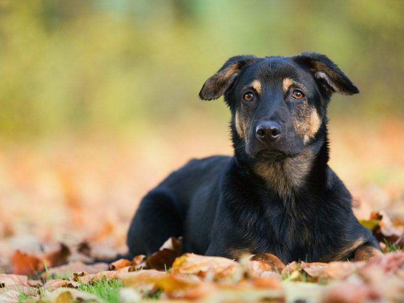 Dog-image-800x600