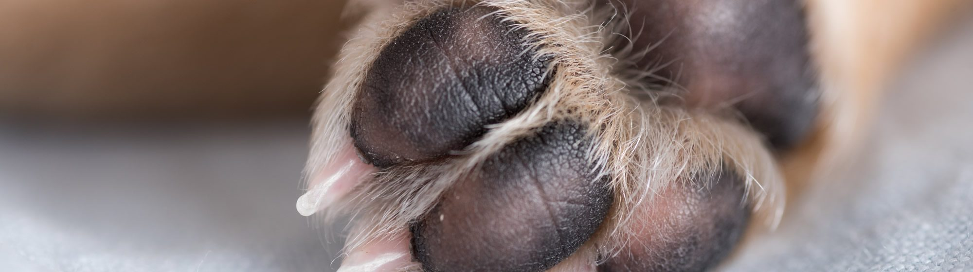 banner-paw
