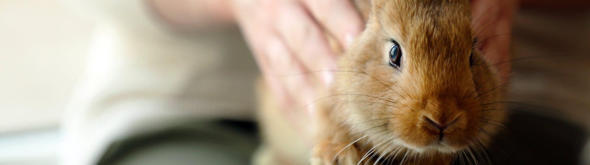 banner-rabbit