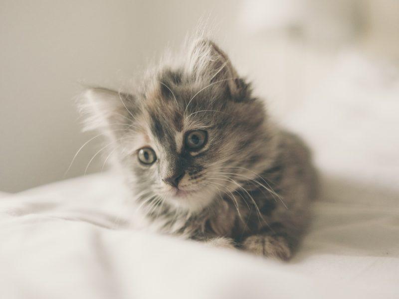 kitten-1031261_1920-800x600