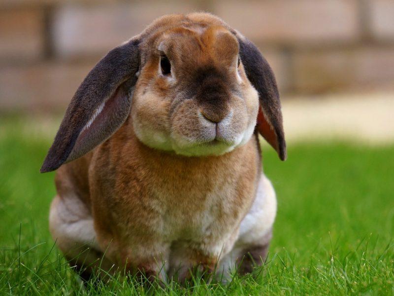 rabbit-1422882_1920-800x600