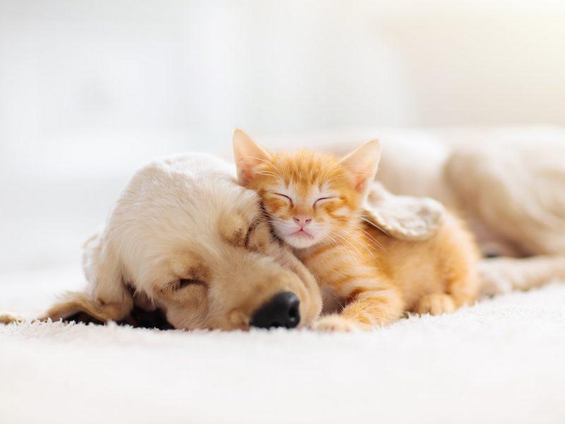 puppy-and-kitten