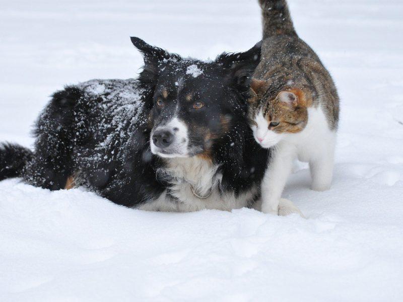 dog-1755423_1920 (1)